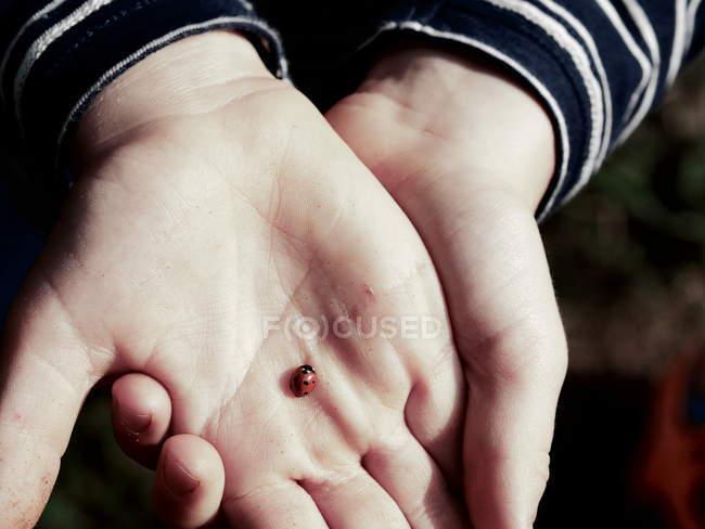 Female hands holding ladybug — Stock Photo