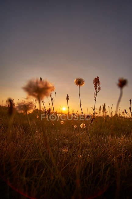 Пейзаж с видом на лугу — стоковое фото