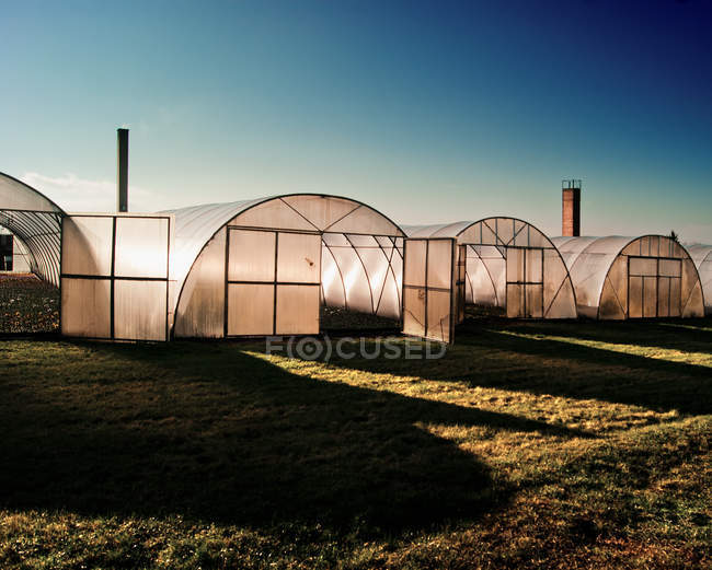 Greenhouses on green grass field in sunny daylight — Stock Photo