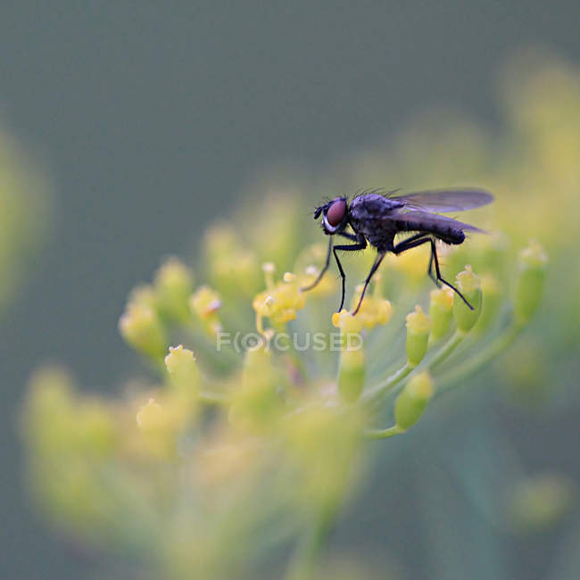 Comune insetto vola — Foto stock