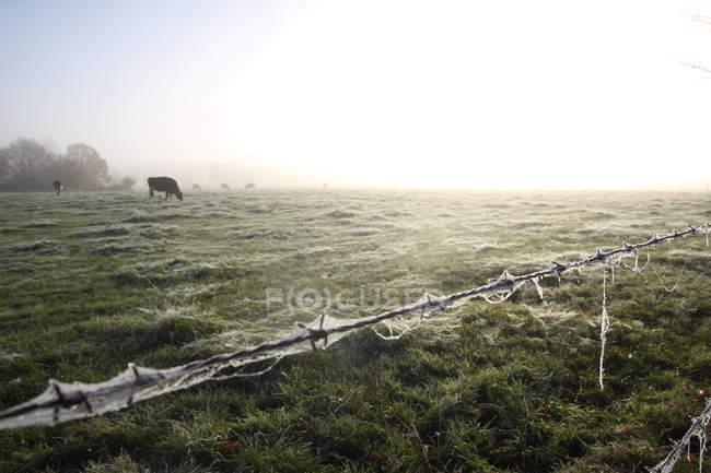 Domaine de campagne de l'agriculture avec la vache — Photo de stock