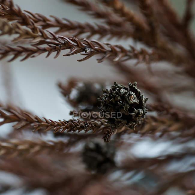 Blattpflanze Zweige — Stockfoto