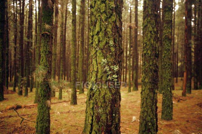 Arbres et forêts vert été — Photo de stock