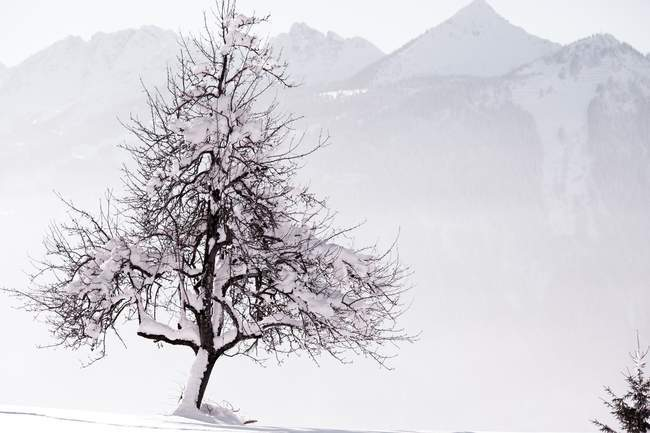 Snowy landscape with bare tree — Stock Photo