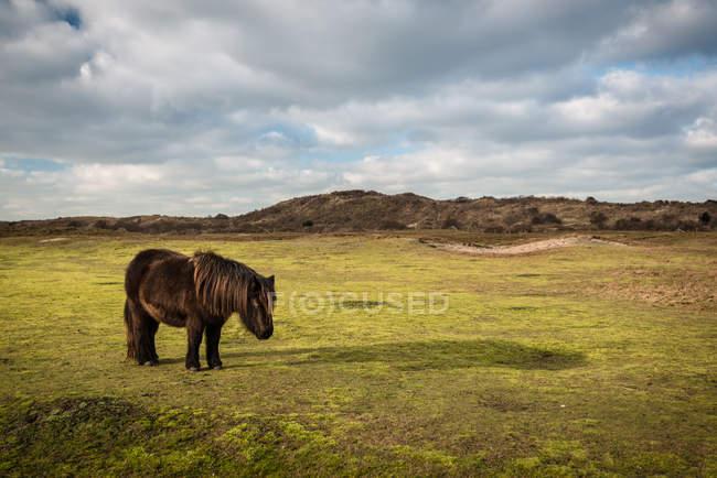 Cavalos pastando ao ar livre — Fotografia de Stock