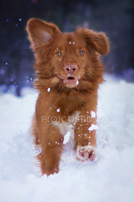 Dog looking at camera — Stock Photo