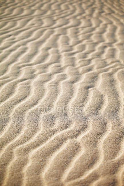 Sand dune at desert — Stock Photo