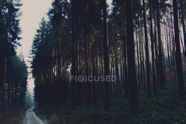 Grüner Wald im Sommer — Stockfoto