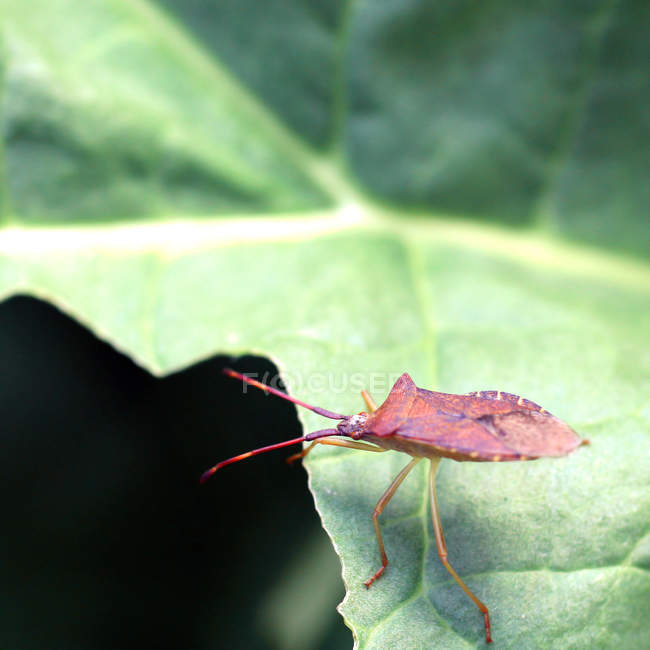 Insecte rampant dans leur habitat naturel — Photo de stock