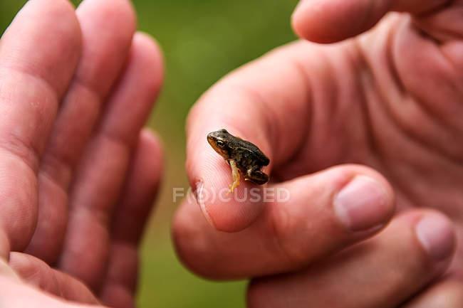 Kleiner Frosch Ansicht — Stockfoto