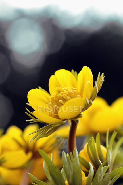 Полевые цветы на зеленом лугу — стоковое фото