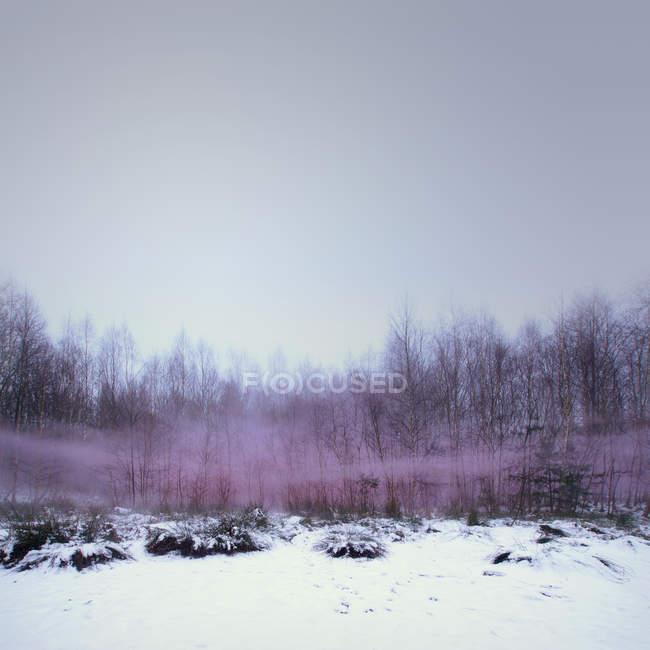 Снежный лес зимой — стоковое фото