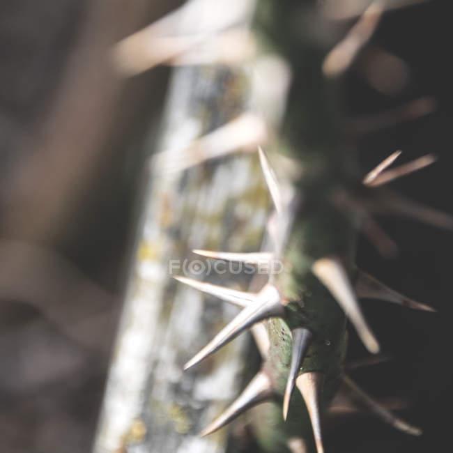 Vista diurna closeup espinhoso flor da haste — Fotografia de Stock