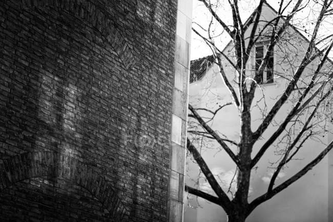 Daytime view of bare tree near brick wall in Dusseldorf, Germany — Stock Photo