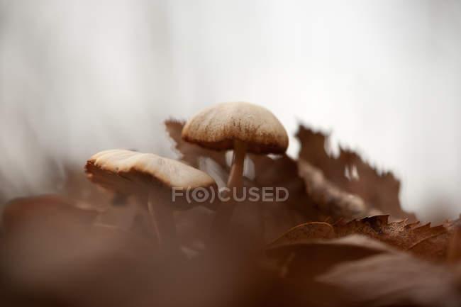 Growing mushrooms, close-up — Stock Photo