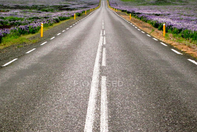 Floraison des fleurs d'été sur les champs et la route goudronnée vide — Photo de stock