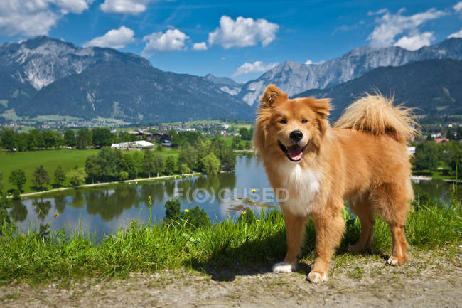 View of fluffy brown dog in nature — Stock Photo