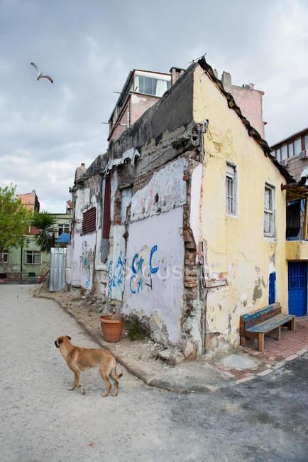 Дневной вид уличный пес стоя возле старых зданий с полетом птиц выше — стоковое фото