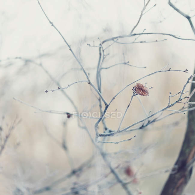 Daytime view of tree branches in hoarfrost — Stock Photo