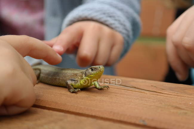 Close-up view of lizard being touching by children — Stock Photo