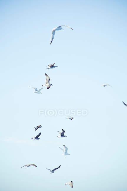 Vista de pájaros Gaviota - foto de stock