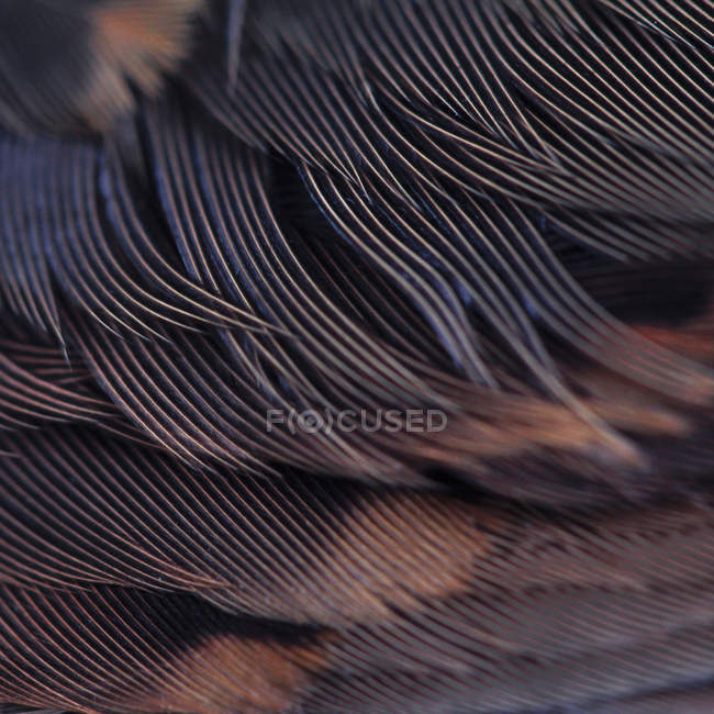 Vista del primo piano delle piume di uccello — Foto stock