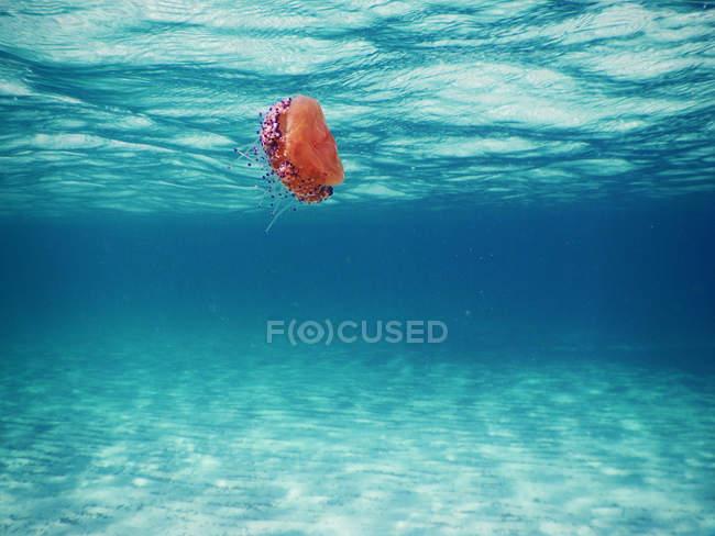 Медузы, плавание под водой — стоковое фото