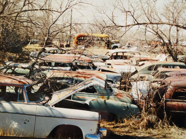 Daytime view of old car dump — Stock Photo
