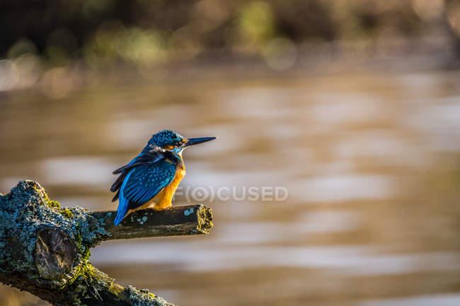 Крупным планом вид птиц усаживаться на ветке дерева — стоковое фото