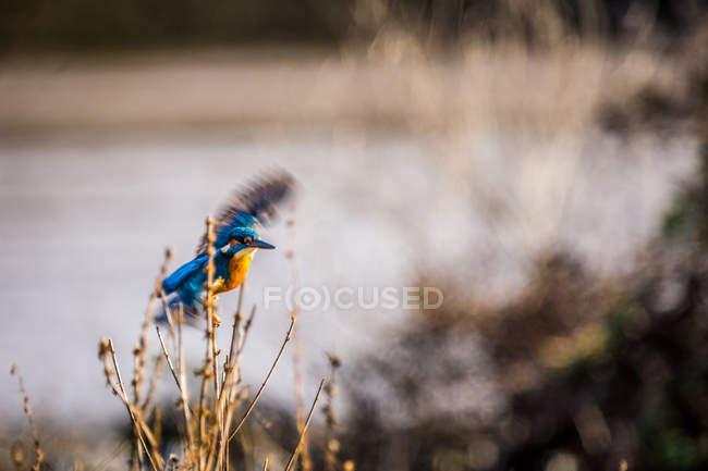 Chiuda sulla vista di uccello che si appollaia sulla filiale di albero — Foto stock