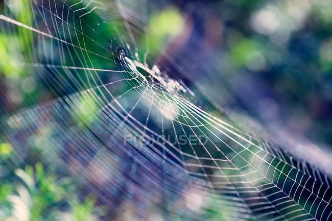 Vista diurna de closeup da teia de aranha vazia — Fotografia de Stock