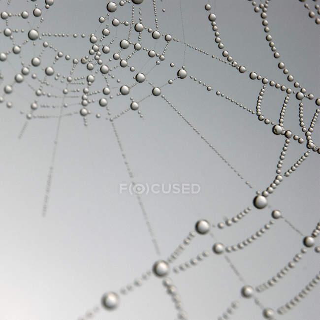 Raindrops on spider web, close up — Stock Photo