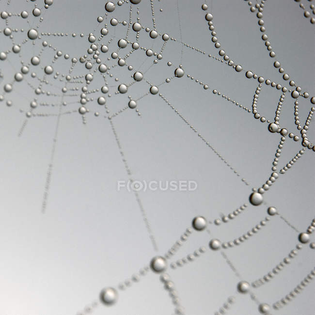 Raindrops on spider web, close up — Stock Photo