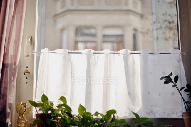 Ventana con cortinas y plantas en macetas - foto de stock