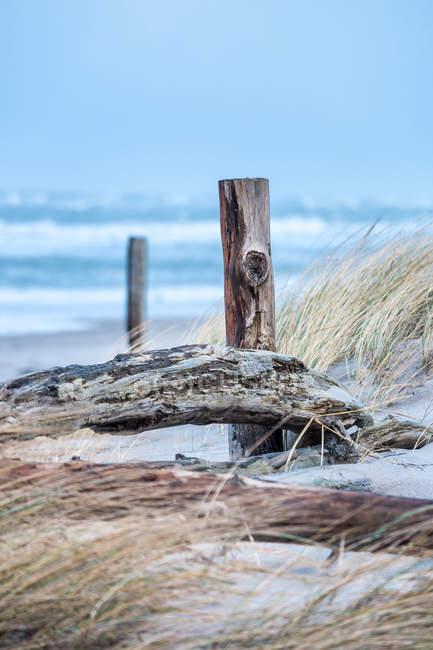 Postes de madeira e grama secada — Fotografia de Stock