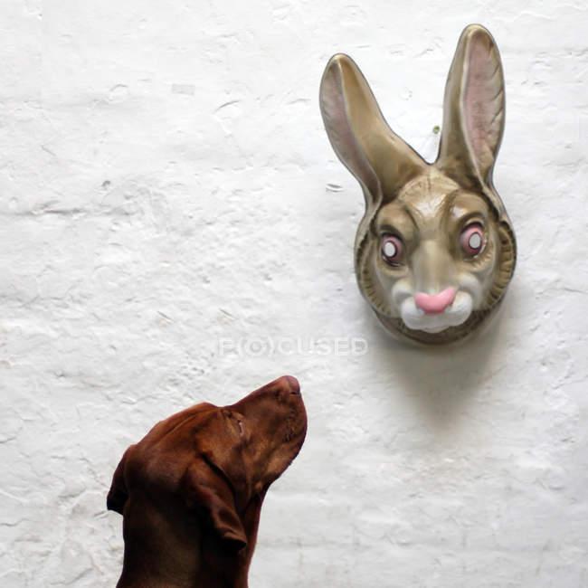 Обрезанное вид собаки, глядя на кролика маски на стене — стоковое фото