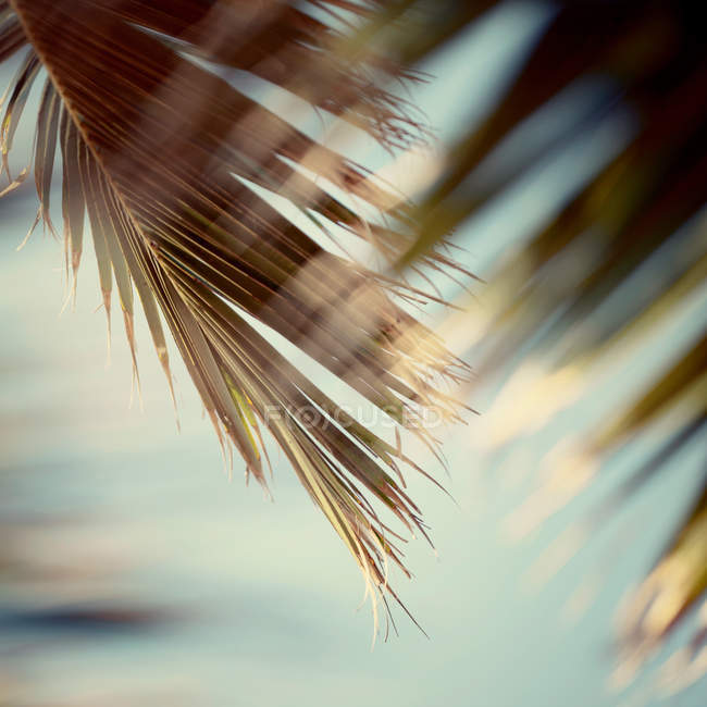 Xotic palm plant leaves — Stock Photo