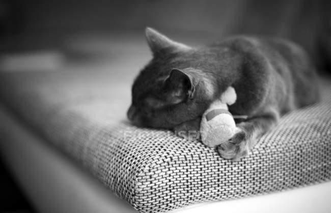 Katze schläft auf couch — Stockfoto