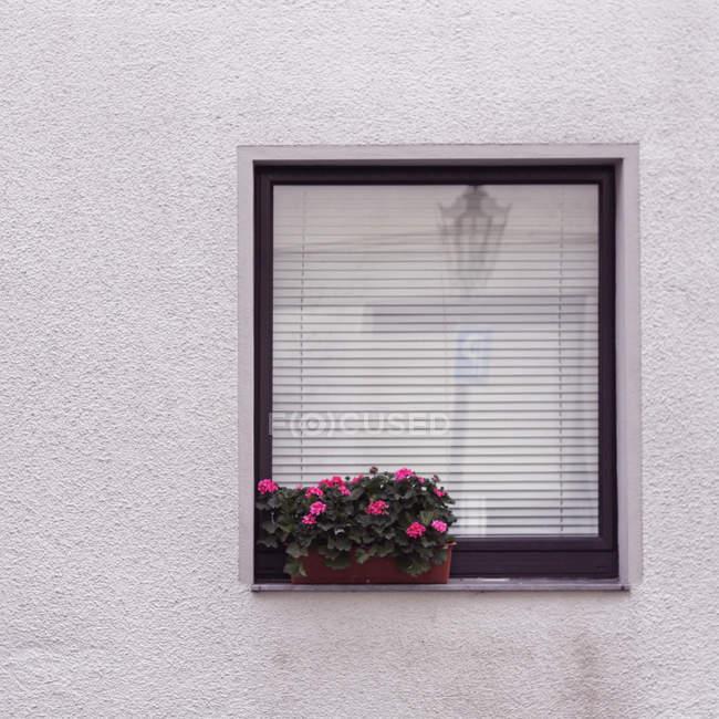 Повного кадру зображення стіни фасаду будинку з вікна і квіти — стокове фото