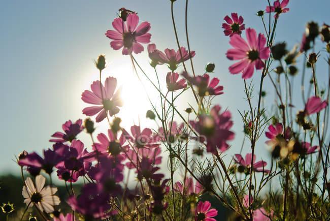 Барвисті квітучих рослин — стокове фото