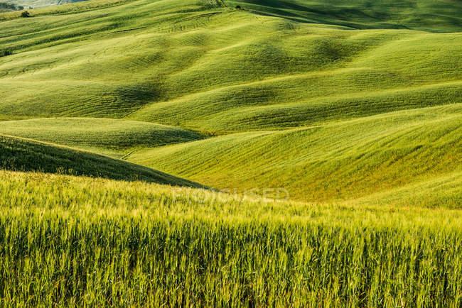 Пейзаж с видом на зеленые поля — стоковое фото