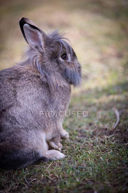 Вид сзади кролика на лугу — стоковое фото
