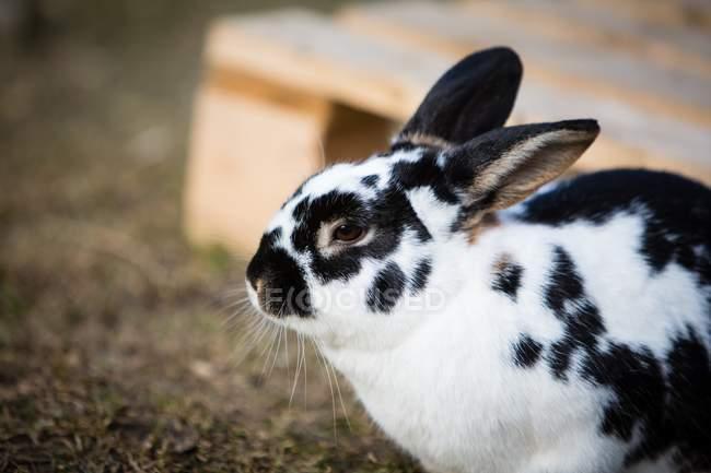 Крупным планом вид кролика в Амбар Ферма — стоковое фото