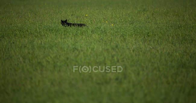 Cat standing in grass — Stock Photo