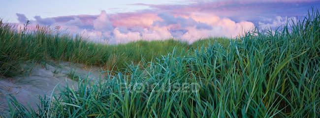 Травянистый луг на склоне горы — стоковое фото
