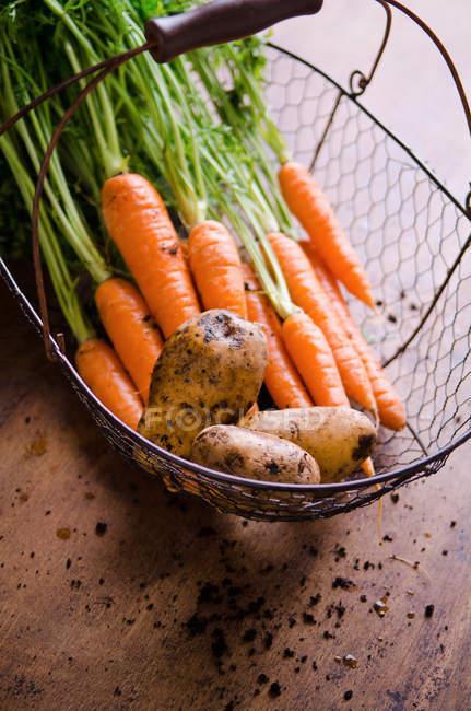 Vista de zanahoria madura - foto de stock