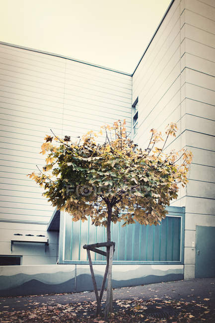 Exterior shot of building facade and autumn tree in street — Stock Photo
