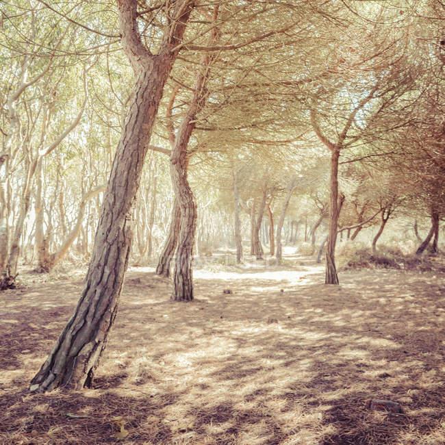 Waldbäume im Herbstzeit — Stockfoto
