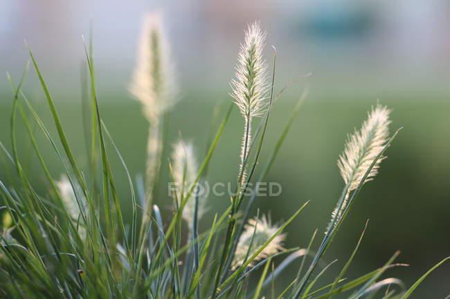 Prato selvaggio con erba verde — Foto stock