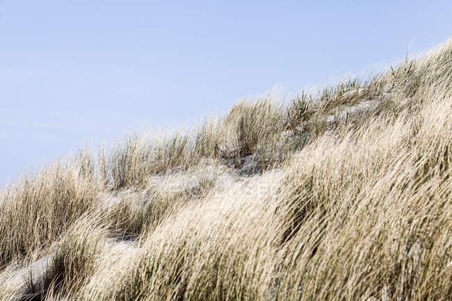 Кущі трава росте на піщаному пляжі — стокове фото